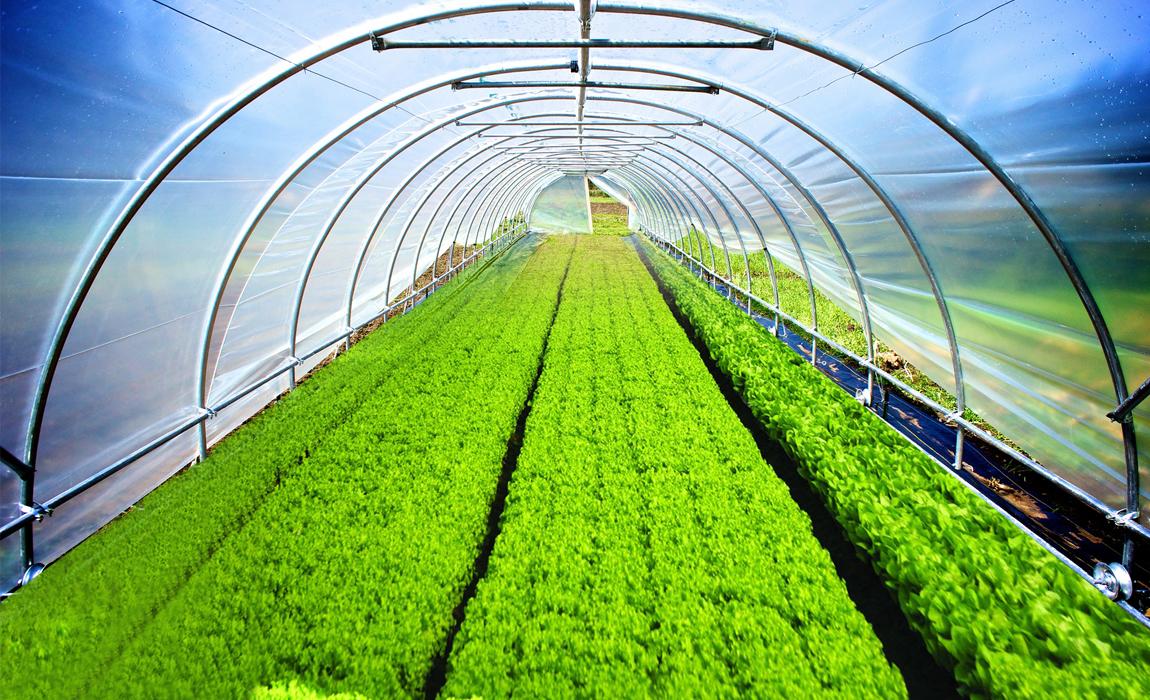 cucumber cultivation in greenhouse pdf in india